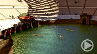 Das Colosseum unter Wasser